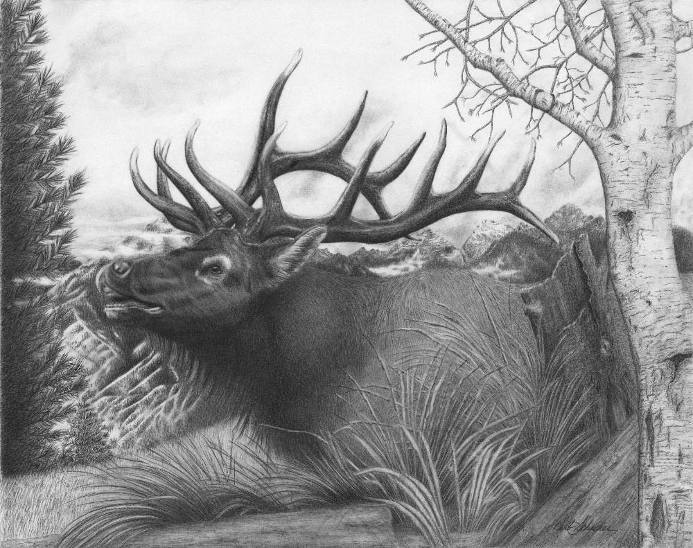 """""""Majestic Bull Elk"""" Original Wildlife Pencil Drawing ..."""