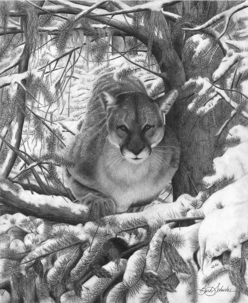 Mountain lion hideout original wildlife pencil drawing