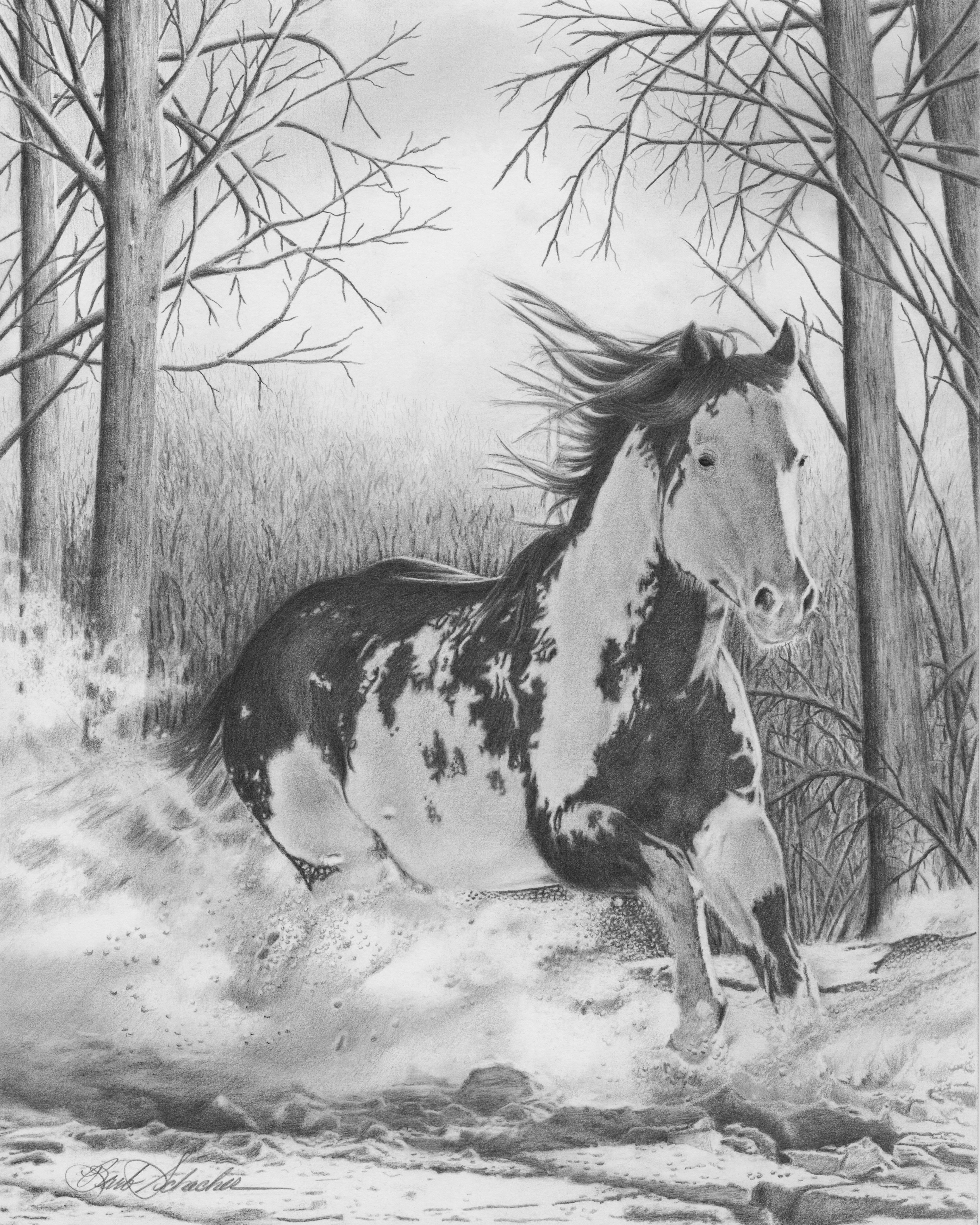 Barb schacher fine art original pencil drawings